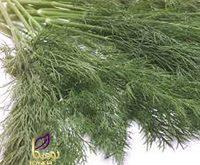 خرید گیاه شوید خشک شده