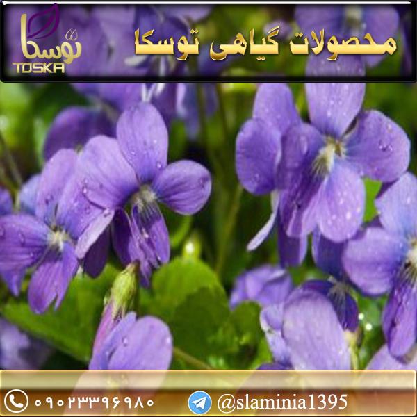 فروش گل بنفشه خشک